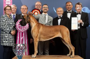 Picture of the Winner Dog in a Dog Show planned by Event Management Company Named Kiyoh