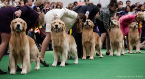 Picture of Dogs getting ready to participate in the Dog Show organized by Event management company named Kiyoh