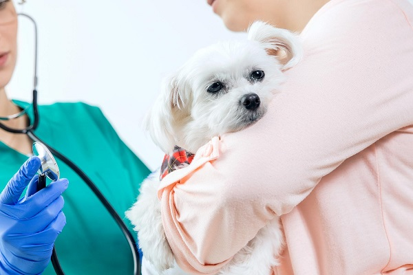 Image showing that a pet check-up before chemotherapy section.