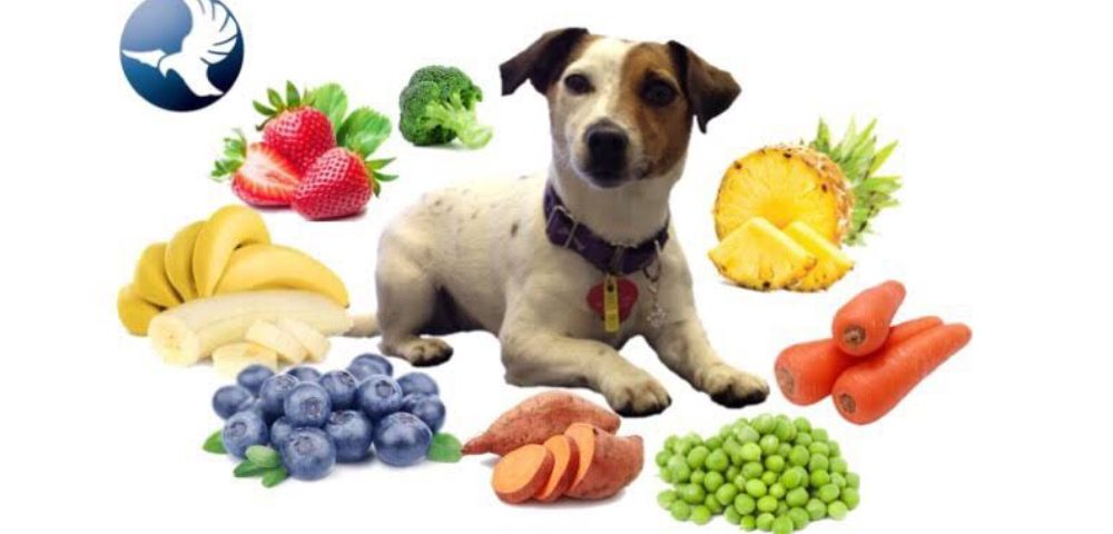 An Image Showing A Little Puppy Isolated On A White Background With Full Of Healthy Fruits.