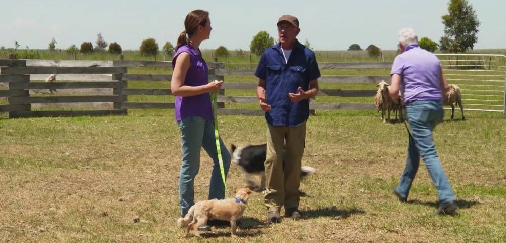 Benefits To Herding Dog Training