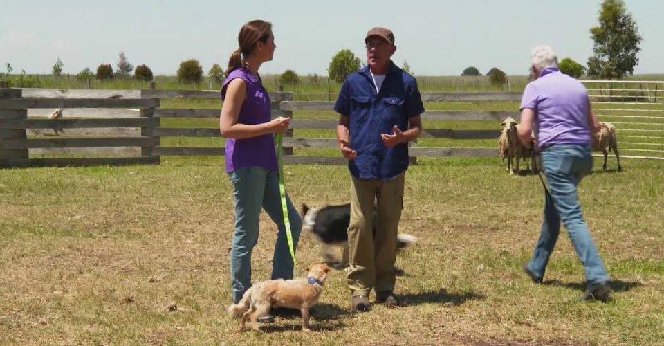 Benefits To Herding Dog Training