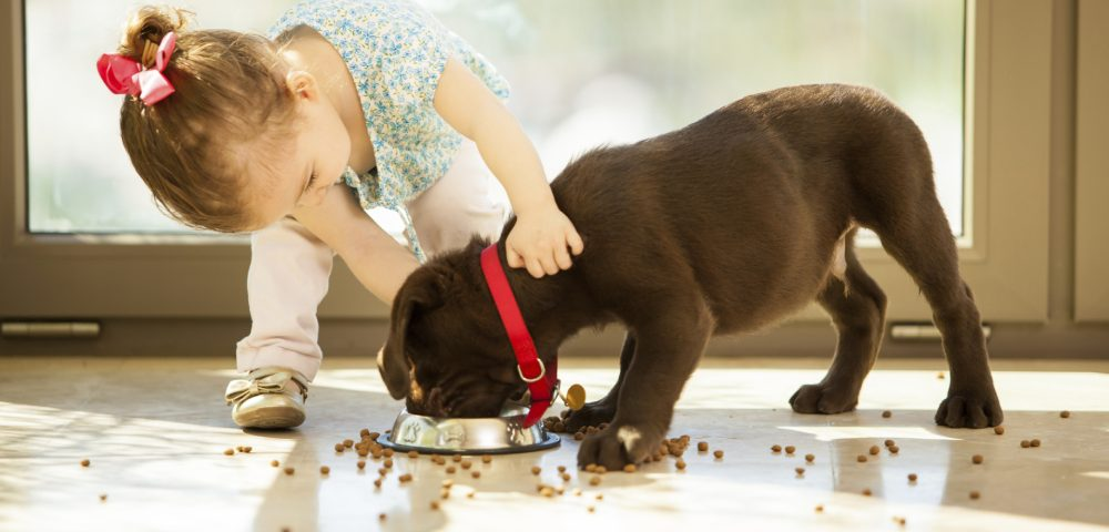 A Little Girl Trying To Feed Food For Her Pet Dog By Gently Pushing Its Neck.