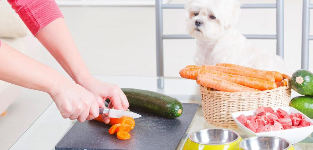 A Dog Owner Cutting Vegetables With Her Havanese Dog.