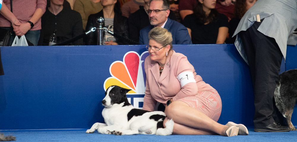 An Image Of Jack Russell Terrier Sitting With His Owner In A Pet Show.